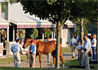 Promotion: Prepping Your Horse for Sale