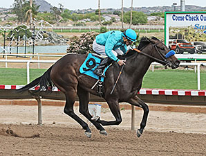 Tempe wins the 2014 Ann Owens Distaff Handicap.