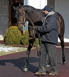 First Mares in Foal to Spendthrift's New Guns