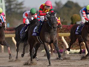 Testa Matta winning the February Stakes.