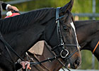 Breeders&#39; Cup Morning with The Fugue