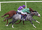 The Grey Gatsby Shocks Australia in Ireland