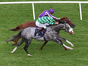 The Grey Gatsby wins the 2014 Irish Champion Stakes.