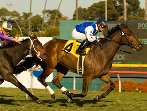 New York Invader The Mailet Posts Miesque Win