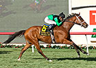 The Pizza Man Wins Hollywood Turf Cup
