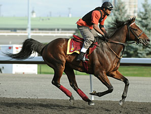The Usual Q. T. at Woodbine on September 15, 2010.