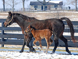 First of the Last Two Theatrical Foals Born