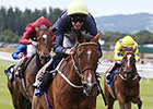 Thistle Bird Swoops for Pretty Polly Win