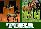 TOBA to Offer Webcast of Ownership Seminar