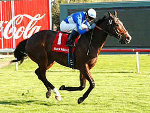 Tie Rod wins the 2010 Turf Paradise Handicap.