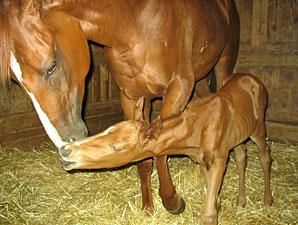 2YO Filly Gives Birth at Louisiana Downs