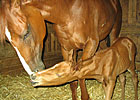2YO Filly Gives Birth at Louisiana Downs