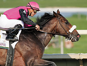 Regal Ransom Wins, Timber Reserve Euthanized