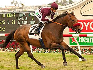 Tiz Flirtatious wins the John C. Mabee Stakes.
