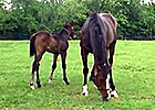 Preakness: Oxbow's Dam Tizamazing with Foal