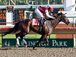 Tizaqueena Rules in Arlington Matron