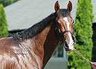 Toast of New York Retired to Stud in Qatar