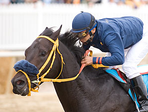 Toboggan Slide wins the 2009 Maryland Million Nursery.