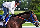 Belmont Profile: Tomcito