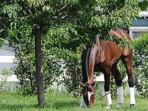 Tonalist at Belmont Park May 24.