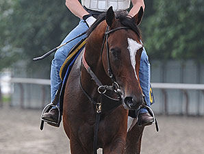 Tonalist at Belmont Park July 3.