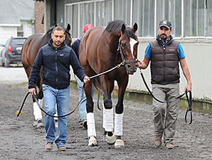 Tonalist at Belmont Park April 30.