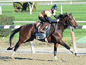Tonalist jogs at Belmont Park on October 25, 2014