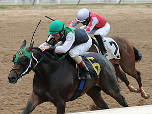 Top Cat Boogie wins the 2012 Louisiana Cup Derby.