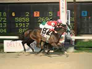 Top Cat Boogie wins the 2012 Pelican Stakes.