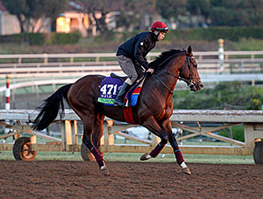 Toronado - Breeders' Cup, October 28, 2014