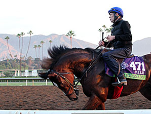 Toronado - Breeders' Cup, October 30, 2014