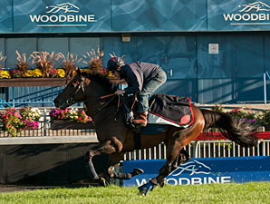 Trade Storm - Woodbine, September 14.