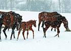 TradeZone: Foal Health