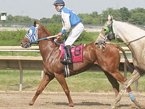 Traffic Light wins the 2013 Donald LeVine Stakes.