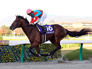 Transcend Repeats in Japan Cup Dirt