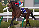 No Catching Transcend in Japan Cup Dirt