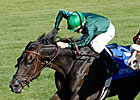 Transduction Gold Glitters in Keeneland's Sycamore