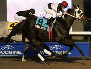 Tribal Belle Rings True Again in Bessarabian