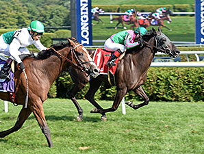 Tricky Hat wins the 2014 John's Call Stakes.