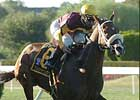 Trippi's Storm Blows Into Kelso Winner's Circle