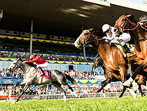 Turallure wins the 2011 Ricoh Woodbine Mile.