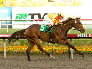 Turbulent Descent Dazzles in Moccasin Stakes