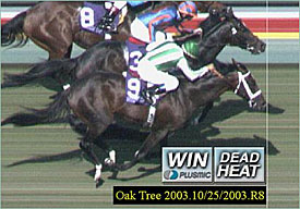 Turf Has First Breeders' Cup Dead-Heat