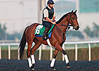 Twilight Eclipse Has Easy Gallop at Meydan