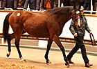 Dam of The Fugue Tops Tattersalls Session