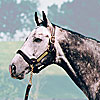 Unbridled's Song's Fee Dropped