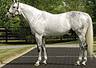 Successful Sire Unbridled's Song Dies