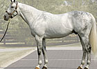 Unbridled's Song Stays at $150,000