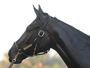 Photo Joe DiOrio Uncle Mo   Race Horse Head Profile