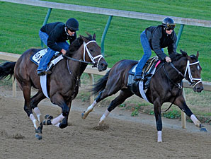 Uncle Mo and Stay Thirsty working towards the Breeders' Cup.